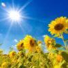 夏の体重変化は身体のバランスを崩す