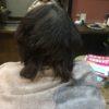 抗がん剤治療後、髪質が変わって悩んでいる方は多いです