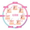 毛周期と頭皮機能低下の要因(6月講習用)