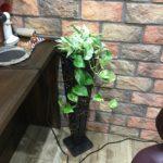 新しい観葉植物を入れました